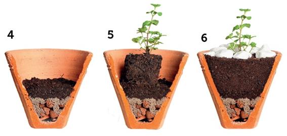 jardim de temperos passos 4 a 6