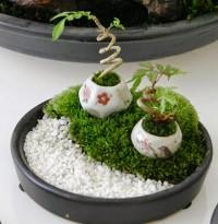 Variedades Minibonsais: pequeninos gigantes | Cozinhas Itatiaia