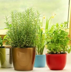 Replante alimentos e economize no dia a dia | Cozinhas Itatiaia