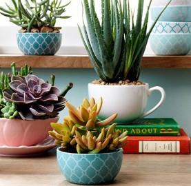 Aprenda como plantar suculentas em xícaras | Cozinhas Itatiaia